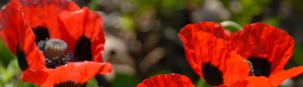 Redhead Garden