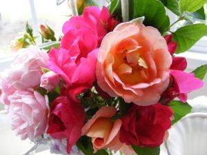 Roses Close Up