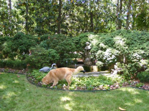 A water feature with the gardener's dog