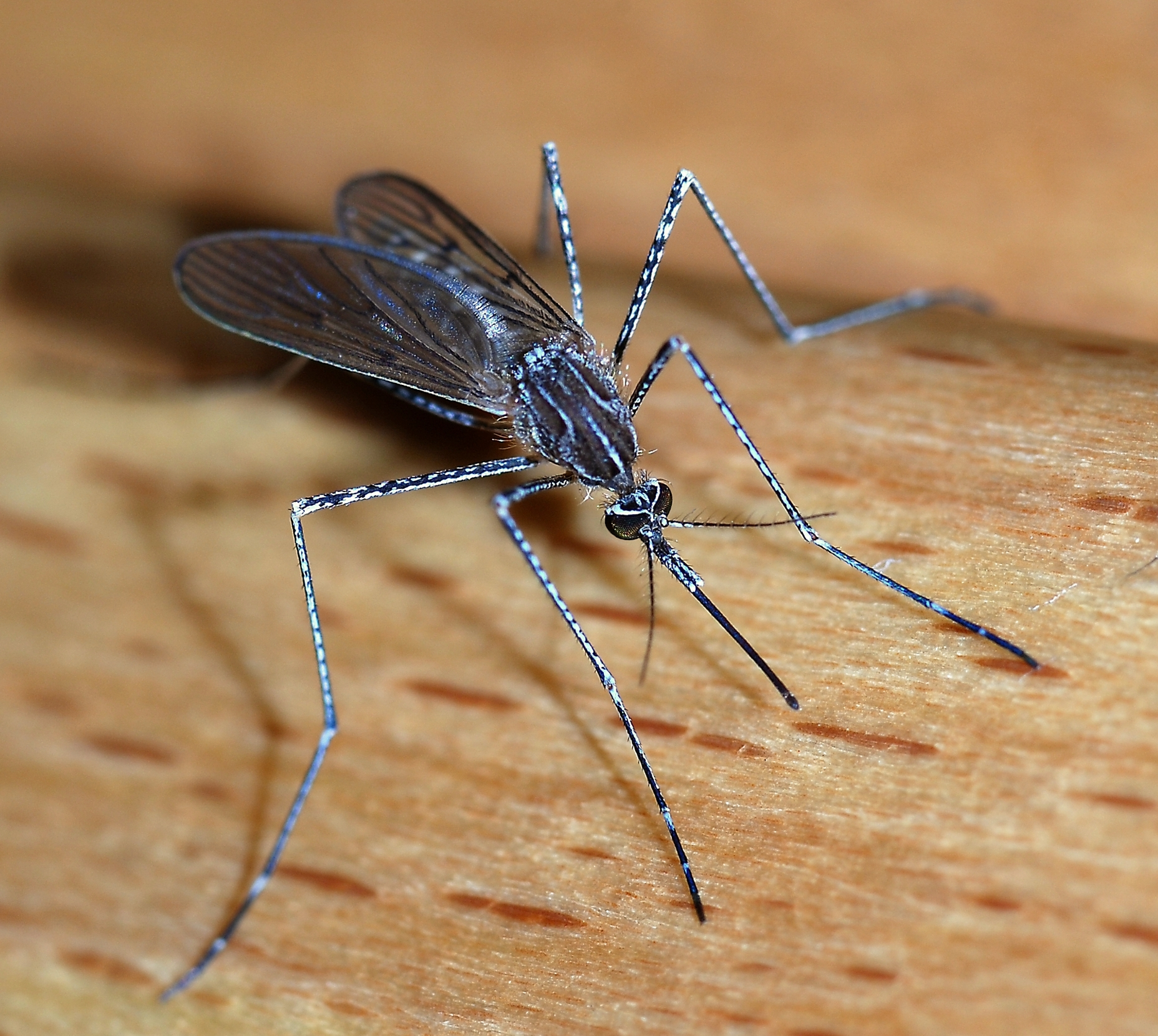 my previous post due to new information about the war on mosquitoes