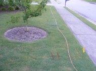 A gas line flagged in my yard